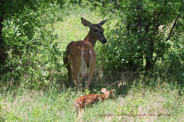 Daisy and Fawn_1405