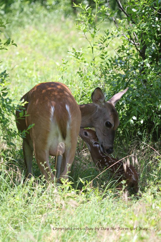 Daisy and Fawn_1407