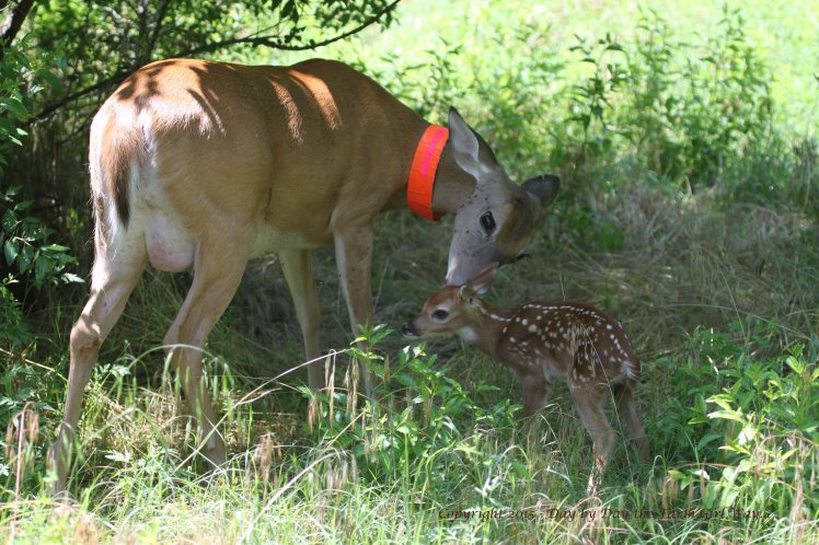 Daisy and Fawn_1425