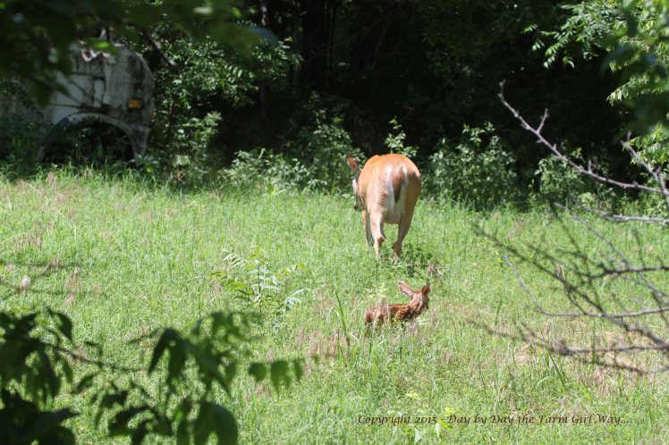 Daisy and Fawn_1444