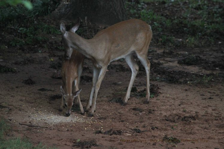 Doe Scarlet and Fawn_2664