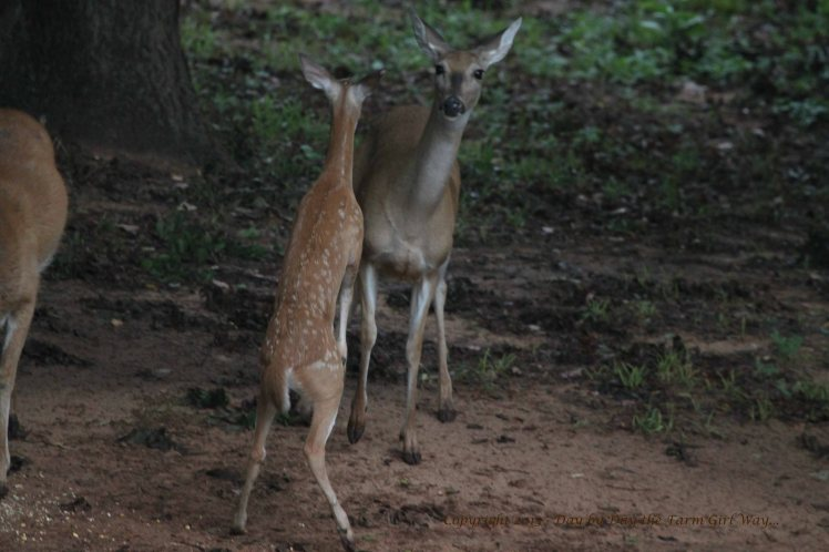 Fawn Hoofing_2679