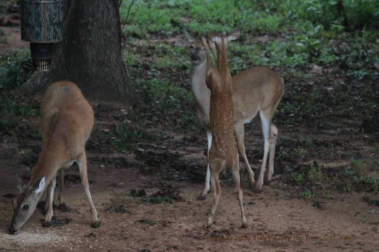 Fawn Hoofing_2684