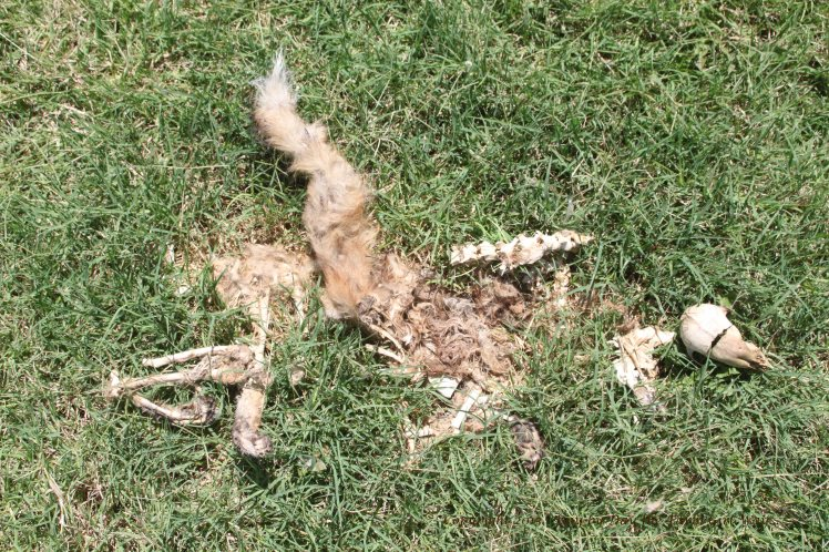 Fox Bones_2691
