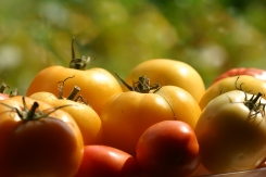 Choose ripe tomatoes of various sizes.