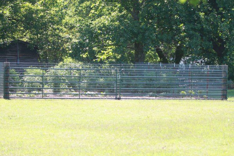 My new garden space not far from the deer pen.