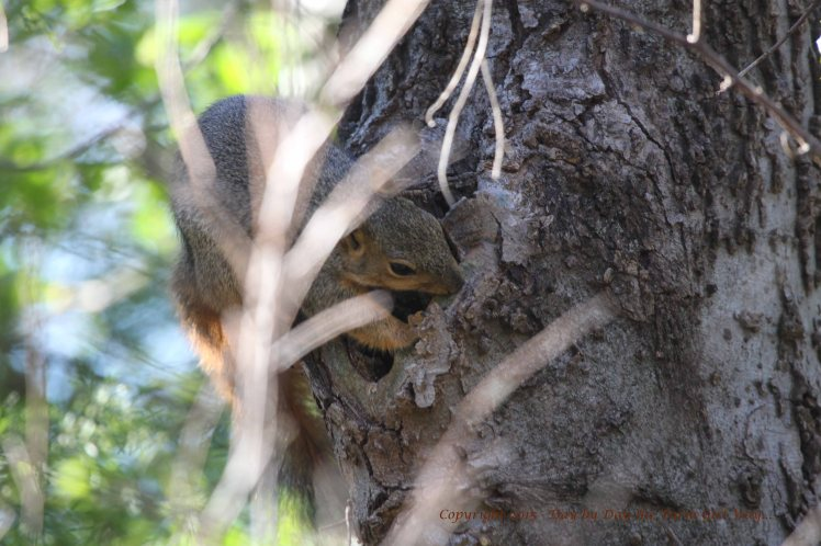 When I walk with Daisy, other forms of wildlife seem less afraid of human presence. This squirrel was chewing on tree bark.