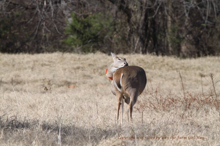 Just like humans, deer suddenly get the urge to scratch an itch!