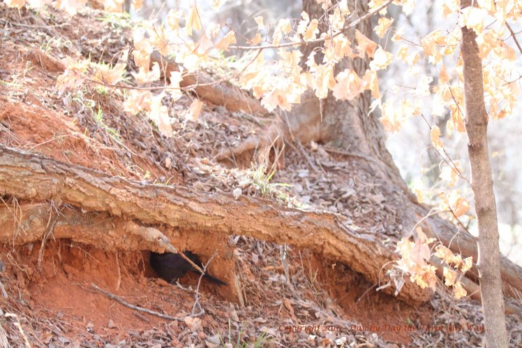 What a clever place to hide - tucked under a tree root in the hillside, not far from the water tub.