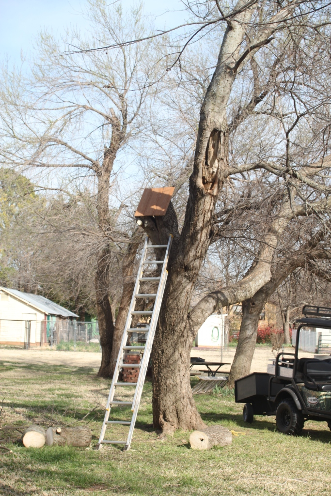 After repairing the south end of the pool, FD fashioned a slant roof for the squirrel nest cavity in the tree.