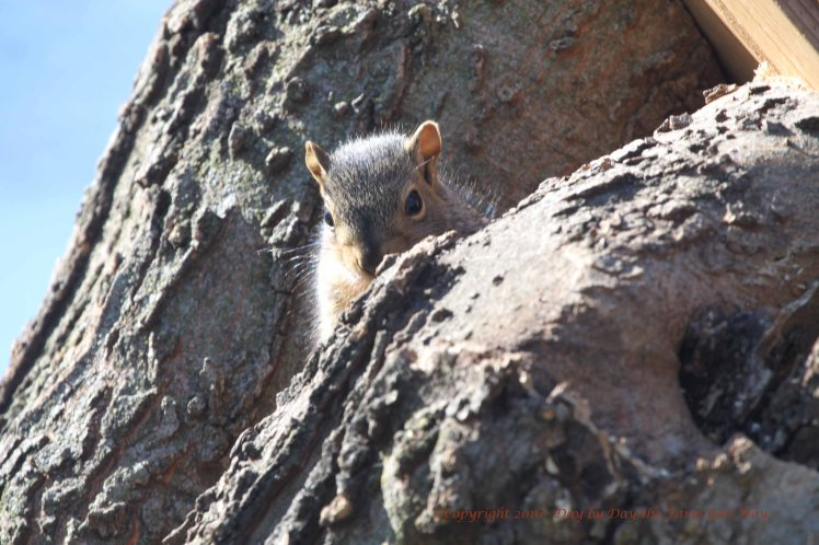 Baby Squirrel_4998
