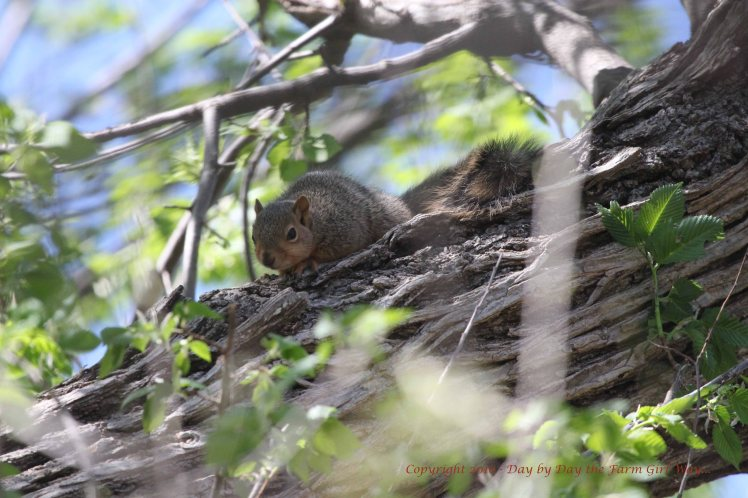 Baby Squirrels_5105