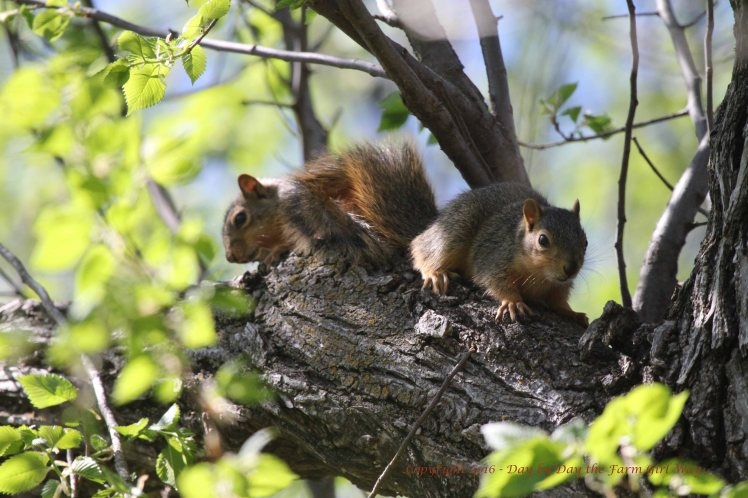 Baby Squirrels_5110