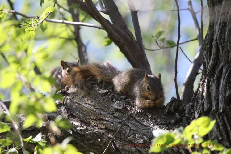 Baby Squirrels_5116