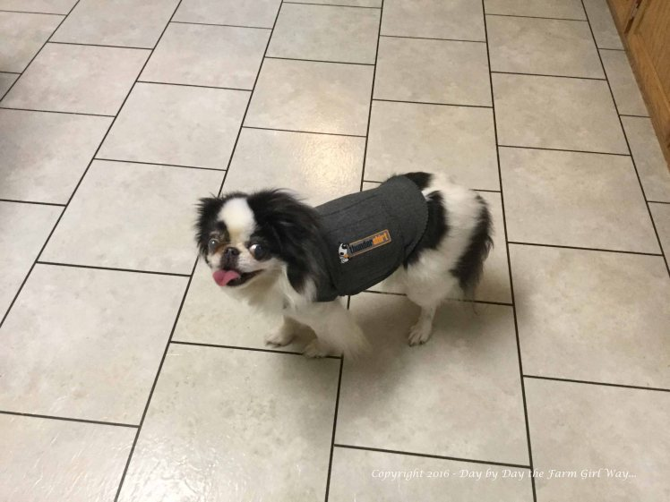 Zoe was terrified of storms and rain. Even the highly acclaimed Thunder Shirt proved ineffective in calming her anxiety!
