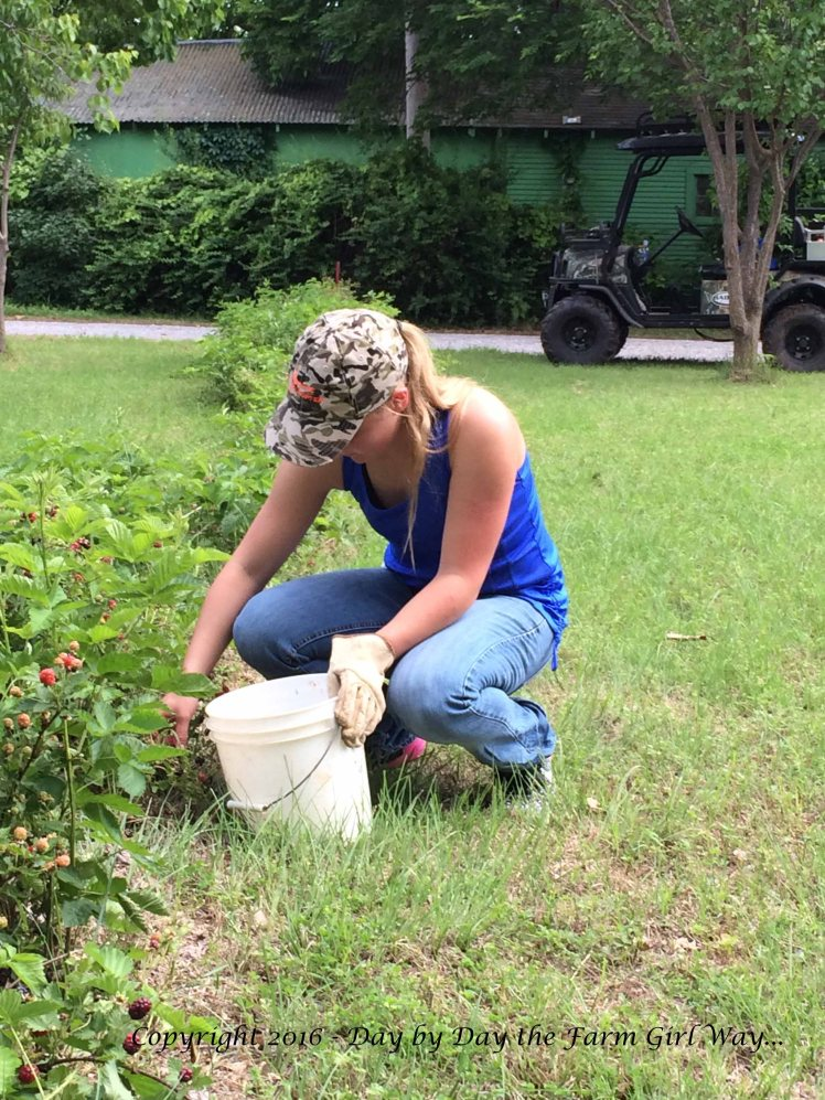 Emily picked a bucket of luscious blackberries to take home with her to Nebraska.