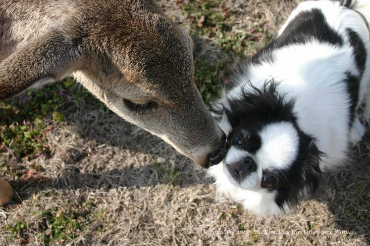 Daisy Deer Medicine for Zoe's injured eye... https://littlesundog.wordpress.com/2012/03/15/daisys-deer-medicine/