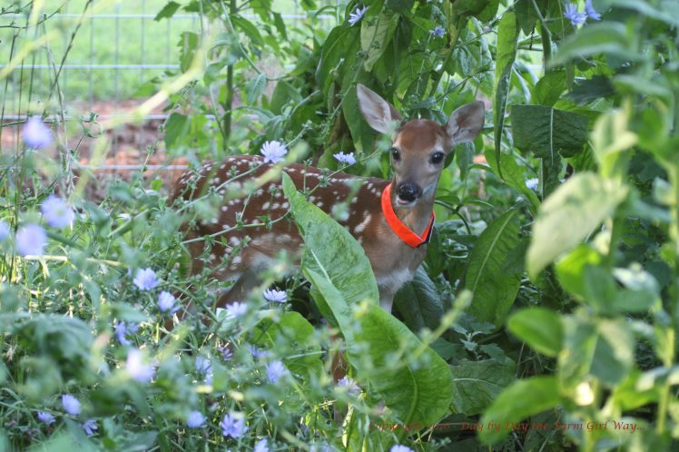 Emma loves to hide in the lush plants of the deer pen.