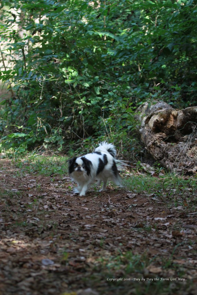 Zoe went with me on many woodland walks. She loved to investigate everything!