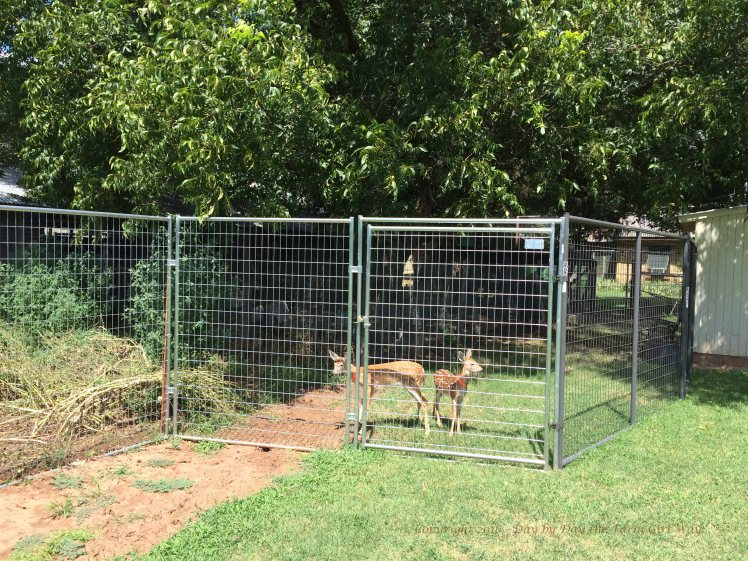 Deer Pen Extension_1167