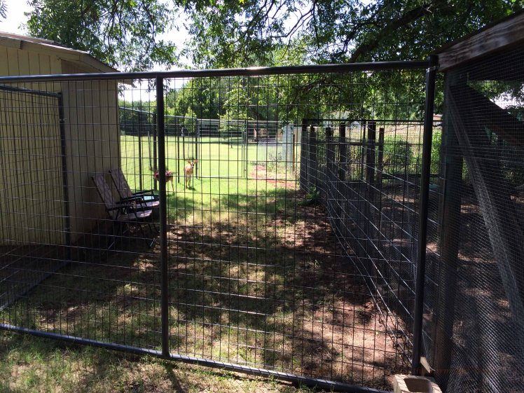 This small 35 foot section of fence cost us $680. Now Emma and Ronnie have a more peaceful location to feed, hidden from the neighbor's dogs. The only problem is they are next to the chicken pen. Dale and Wesley the roosters are mighty loud when they compete at crowing!