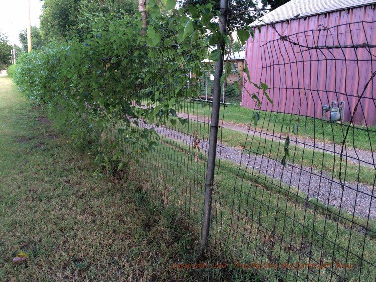 Cut Fence_1192