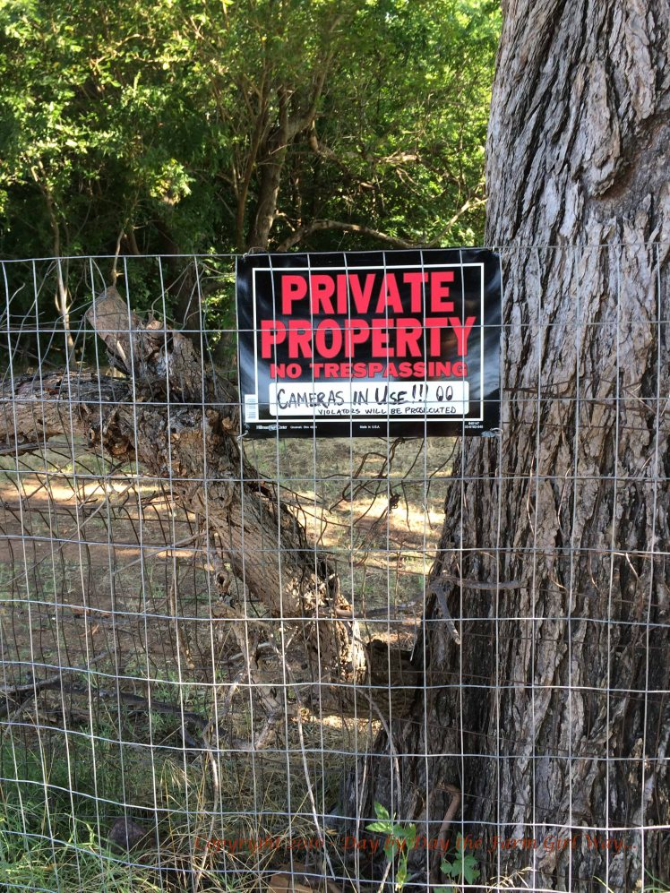 Location of second cut, right beside a large elm tree. It is a good thing we keep plenty of Private Property signs on hand!
