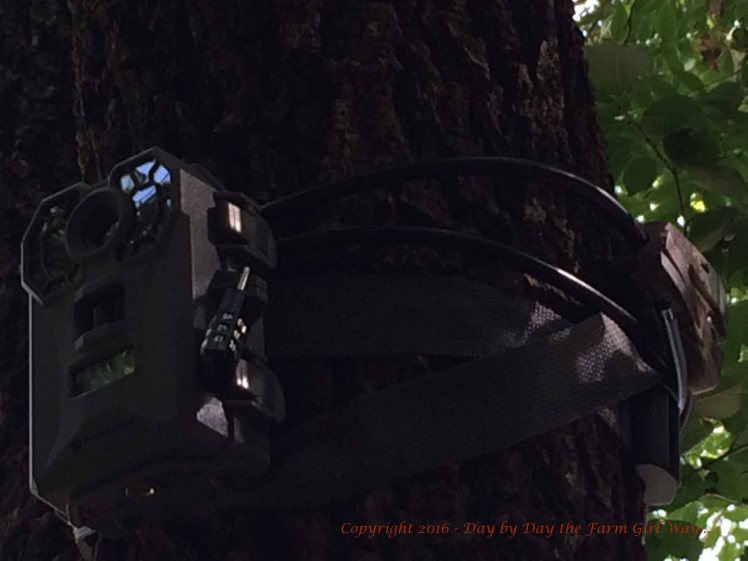 The new Stealth game camera was well-hidden up high in the shade of the elm tree.