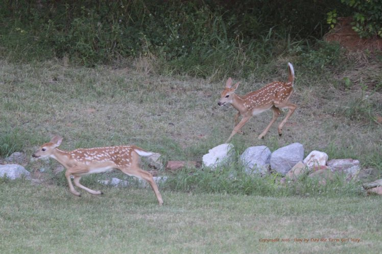 These two seem to be playing, but they are also practicing skills they will need in the wild.