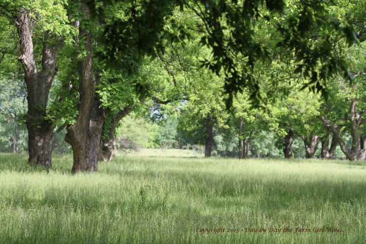 Early summer is a lovely time to walk the Pecan Orchard. Everything is coming to life in the woodlands.