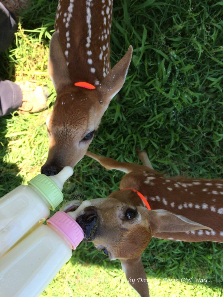 It was easy to feed Emma and Ronnie back when they drank just one bottle each!