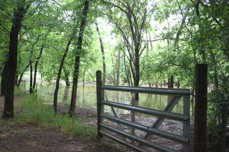 The gate from Ten-Acre Ranch to the pecan orchard was kept closed during spring rains in 2015. I'm afraid the electric buggy would have gotten stuck, and the water was too high to venture far in my rubber boots!