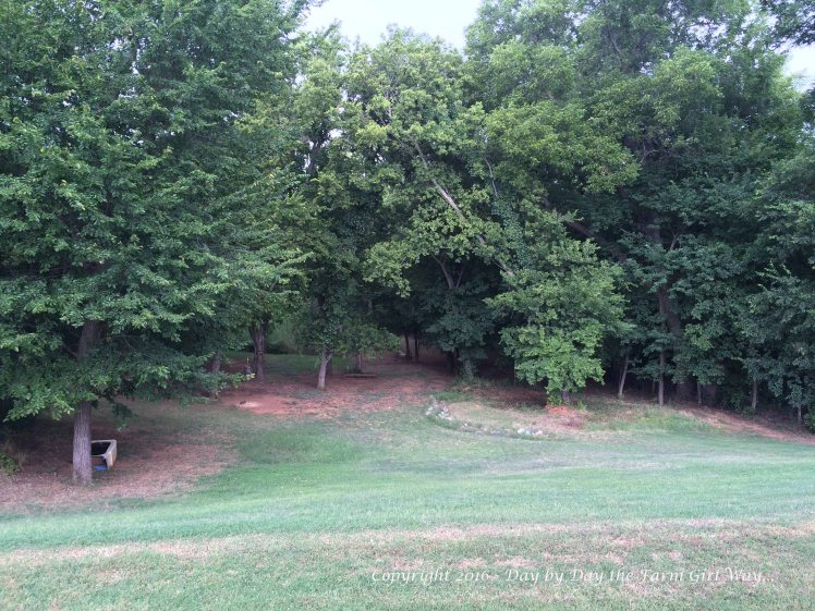 The woodlands are beginning to show signs of heat stress... leaves curl and fall, and the grass and vegetation begin to dry and go dormant.