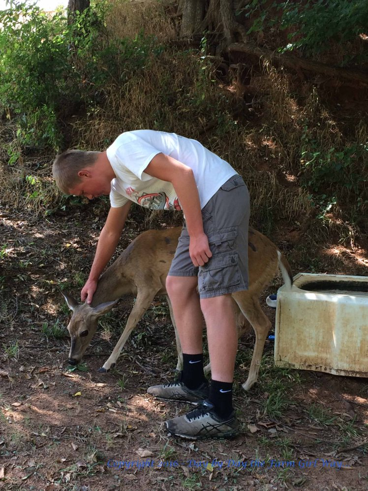 Sid had plenty of opportunities to help out with wildlife chores while he was here. Daisy showed up most every day with her buck. Sid helped feed and cut greens for Emma and Ronnie deer, and fed Buddy the squirrel pecans .