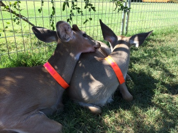 Ronnie lays his head on Emma's back. He relied on his big sister to comfort him.