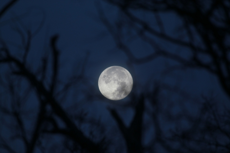 Night Moon_2207
