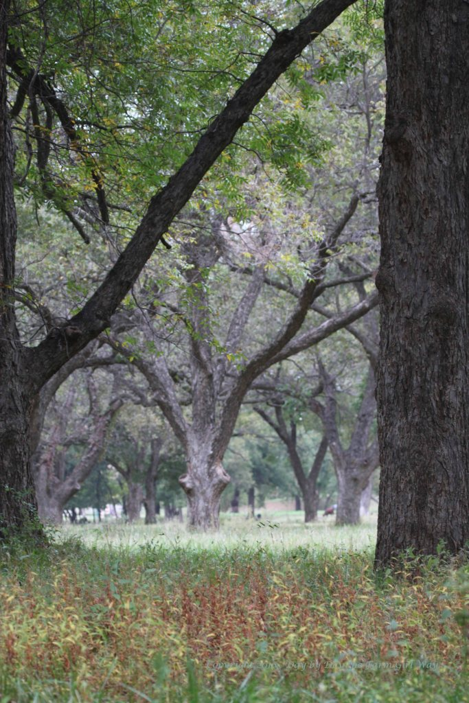 As I headed home through the pecan orchard I stopped to photograph the slight colors of autumn. I'm beginning to wonder if we will ever get fall temperatures. It still feels like summer!