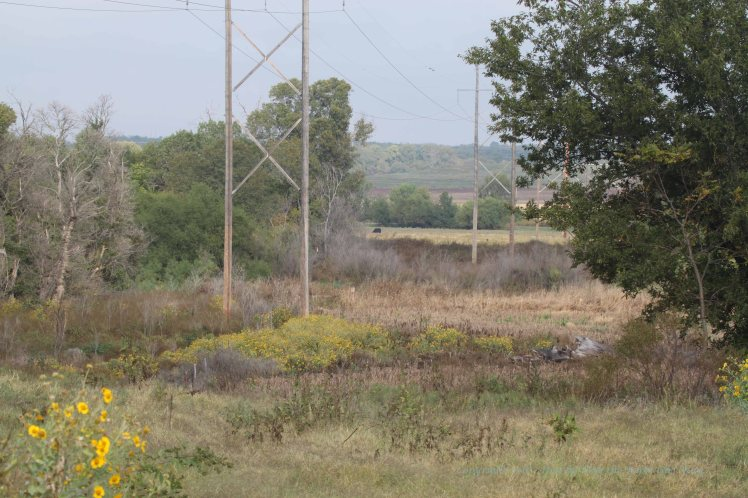 My destination was the area by the second transmission line. But vegetation was much too tall and thick for me to get a view of the river.