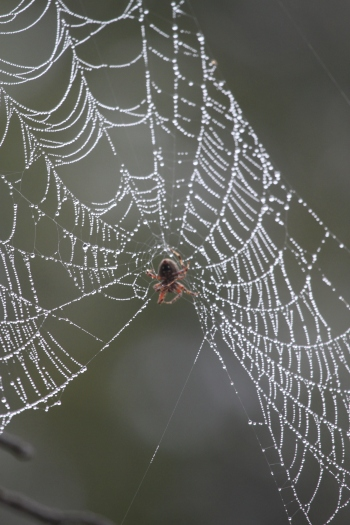 Spider In Fog