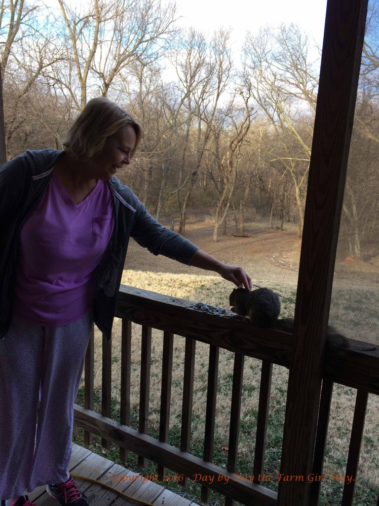 Punkin came to visit often and Lisa enjoyed feeding her sunflower seeds. Punkin allows gentle petting while she eats.