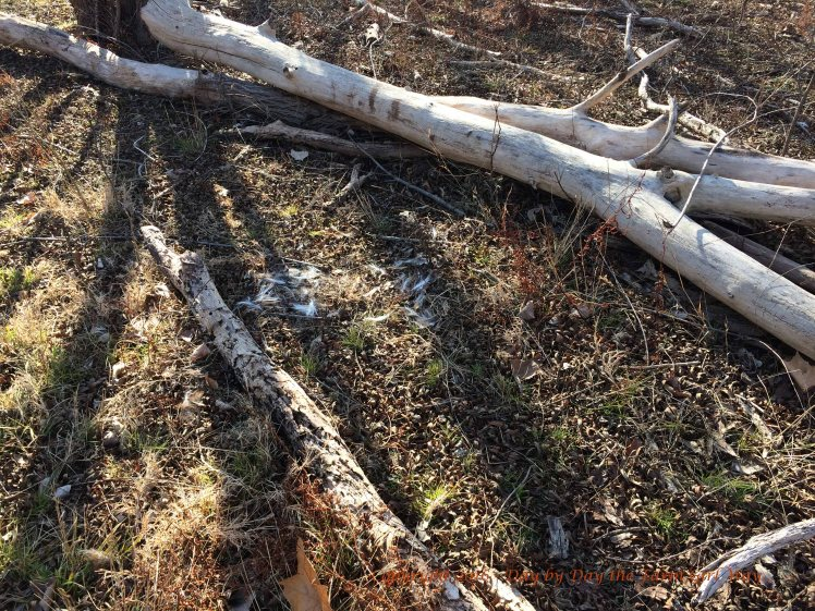 Scatterings of deer hair have been found all along the east fence line.