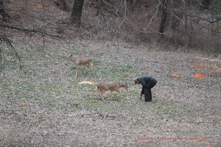 FD tries to get Ronnie to eat some clover down in the clover plot in the bowl area of the canyon.