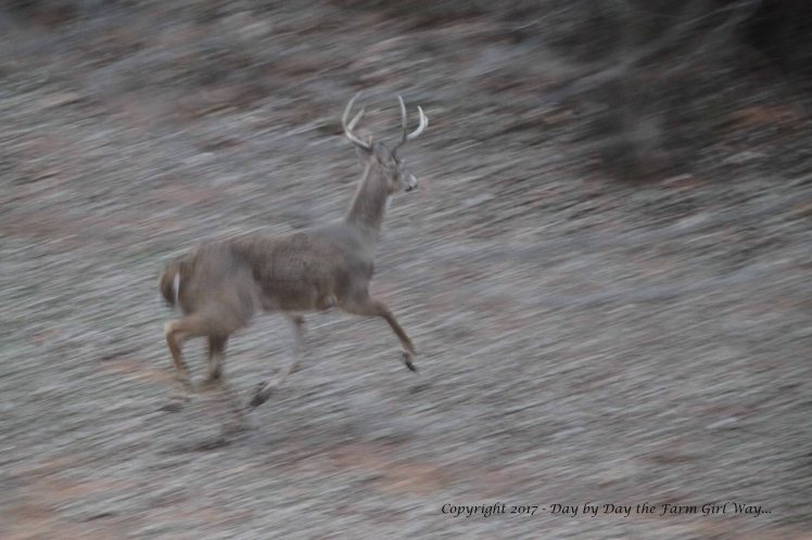 """The morning cold and low light made for this odd """"panning"""" shot of the buck."""