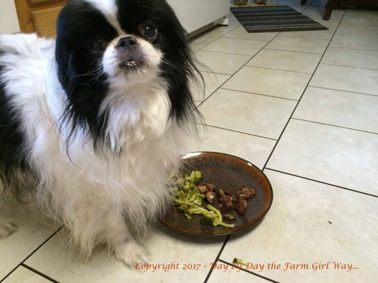 I did a lot of special cooking hoping to keep Bear nourished when he began having stomach issues and losing weight. Chicken liver and broccoli or carrots was a favorite.