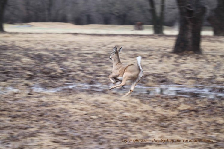 Ronnie Running_8717